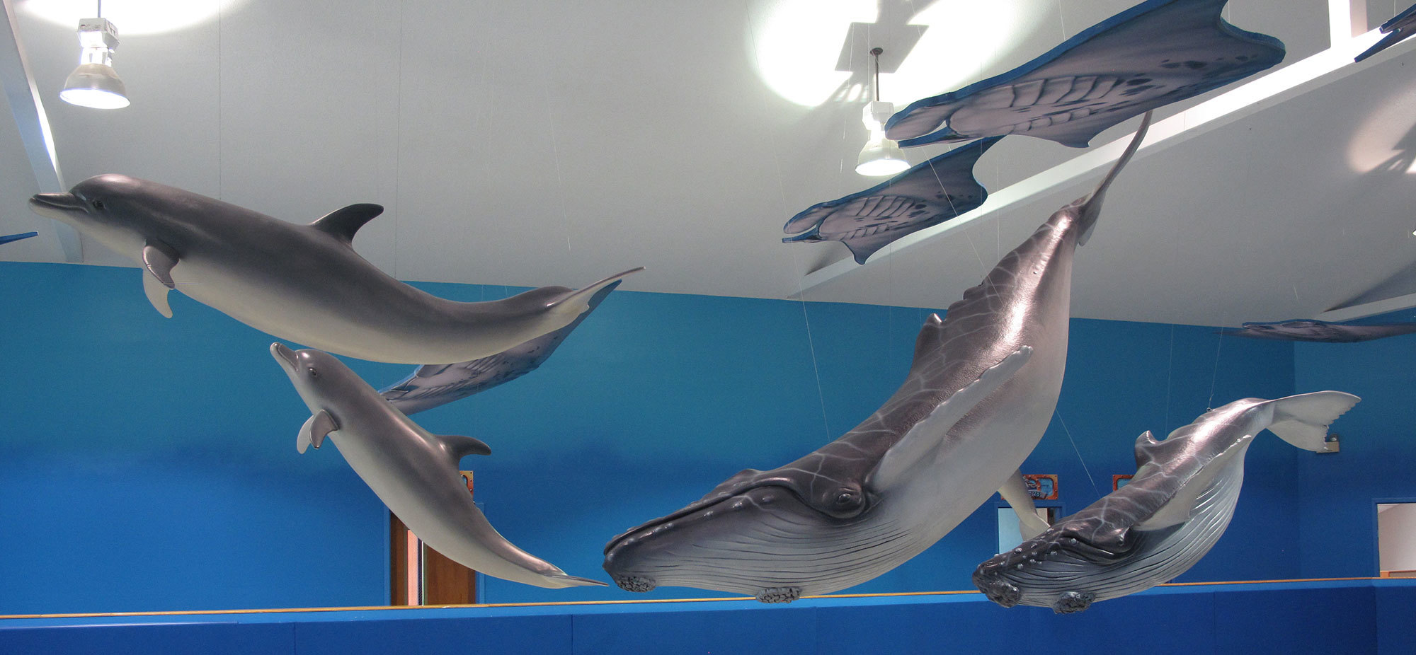 3D sculpted Dolphins and Whales at Grace Church